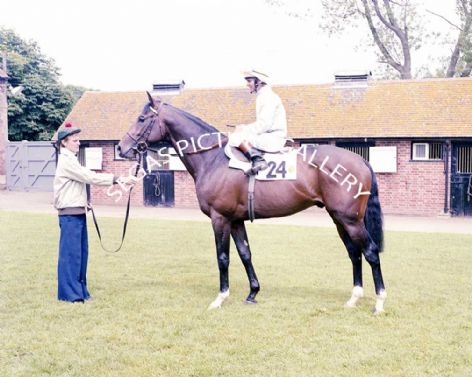 Racehorse Troy with Jockey Willy Carson